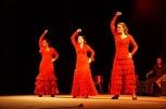 Luna Flamenca Sao Carlos11