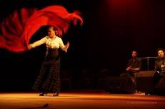 Luna Flamenca Sao Carlos26