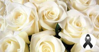 rosas-brancas-7 cópia